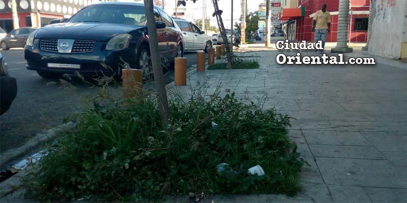 El sucio y la maleza abundan en la avenida Venezuela
