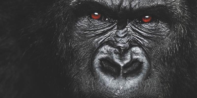"""Photo of ¿El ASDE usa """"gorilas"""" en su equipo de seguridad? Este regidor dice que si + Vídeo"""